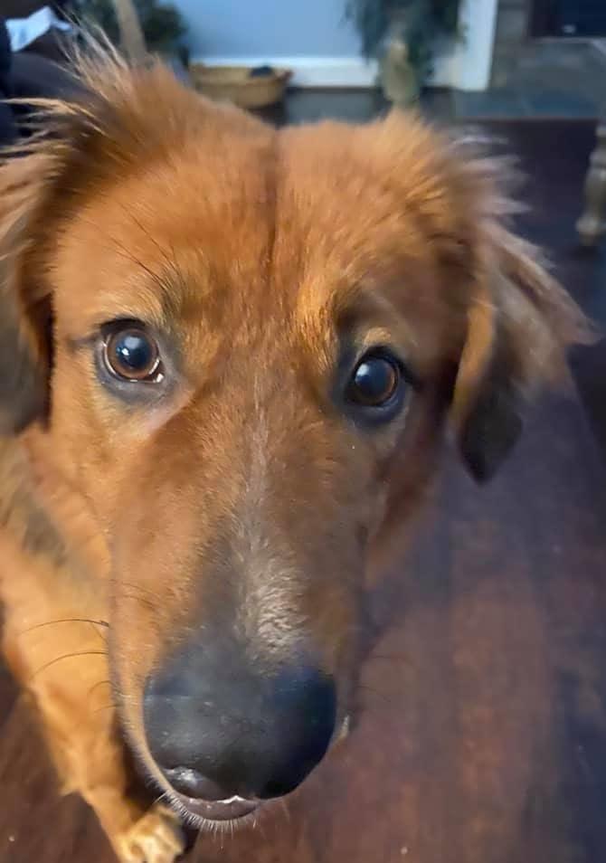 Dog Rescue in Maine