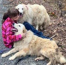 Rescue Charlie's Friends Dog Rescue Maine