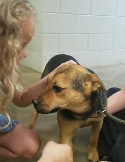 Rescue Charlie's Friends Dog Rescue