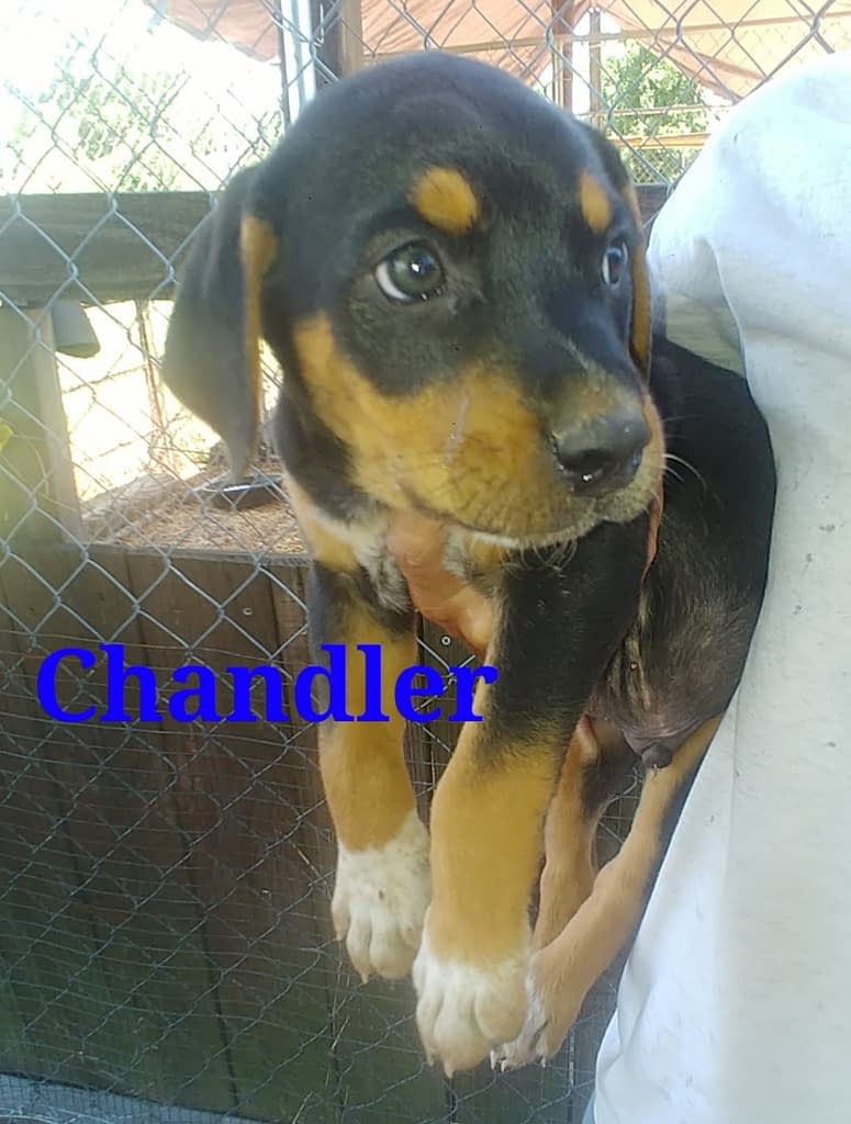 Rescue Charlies Friends Dog Rescue Maine
